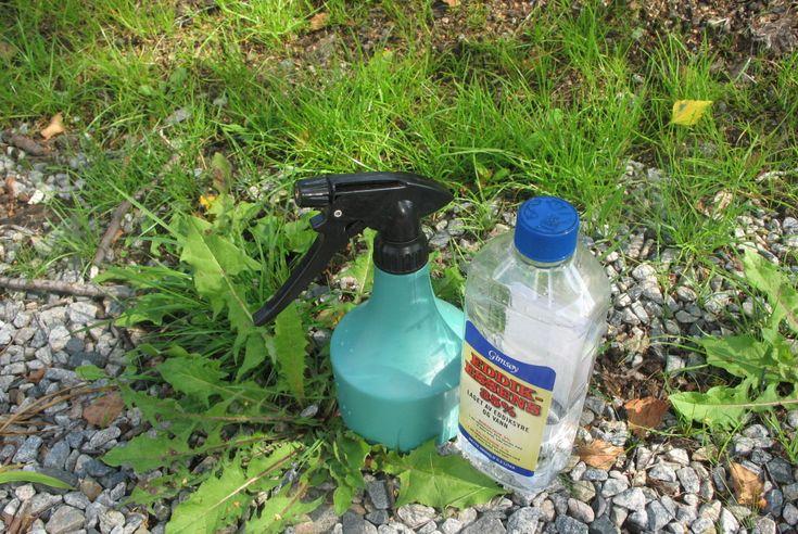 <b>FUNKER SOM BARE RAKKER'N:</b> En blanding vann og eddik er supert og billig ugressmiddel.  Foto: KRISTIN SØRDAL