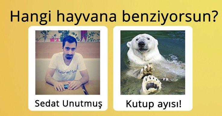 Hangi hayvana benziyorsun?