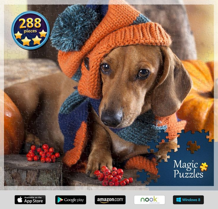 Fall Wallpaper Dog Weenie 28 Best Long Haired Mini Dachshunds Images On Pinterest