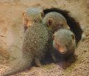 Tierpark Hagenbeck  https://www.hagenbeck.de/startseite.html