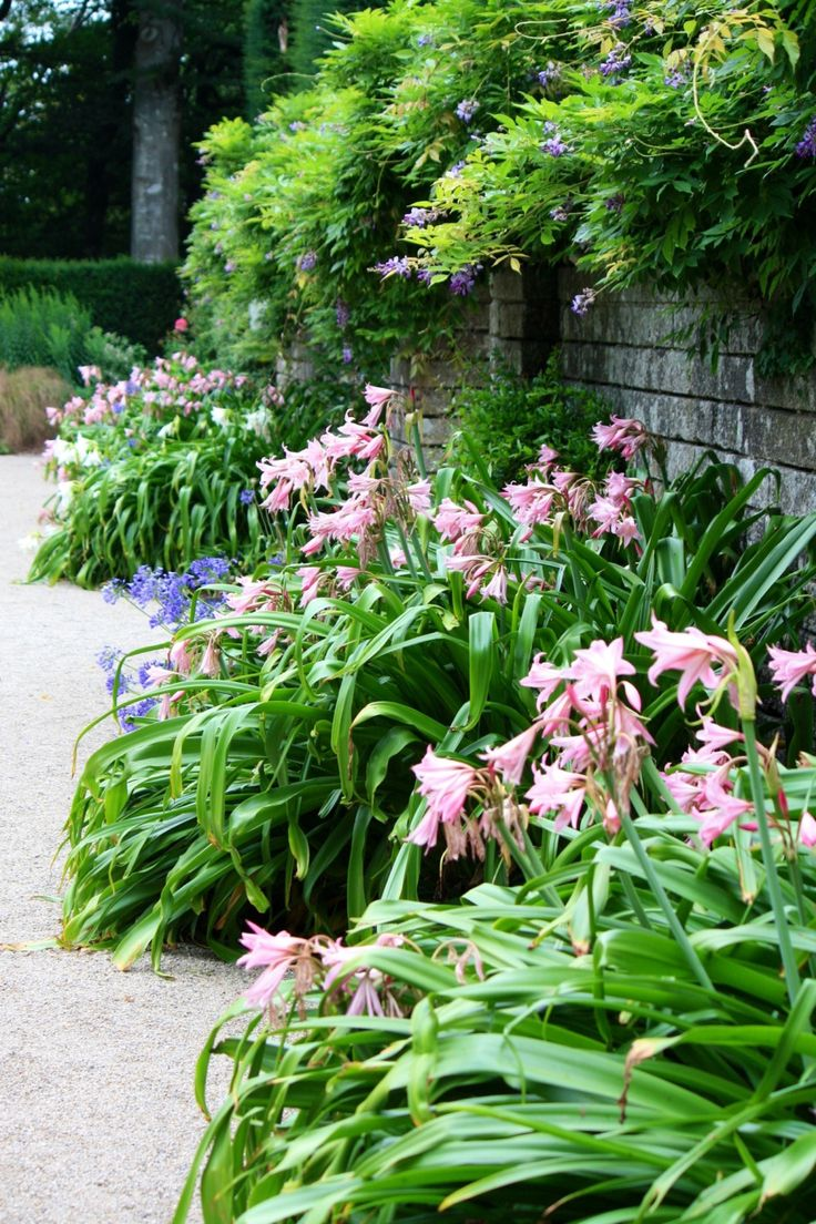 164 best Plant combinations images on Pinterest | Landscaping ...