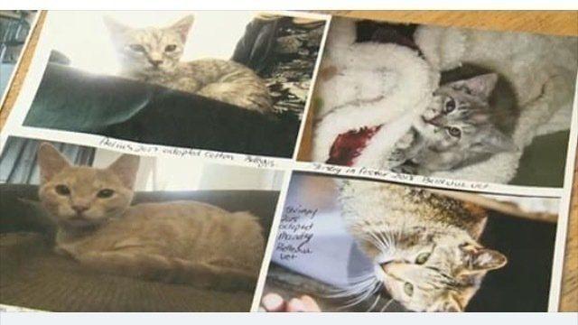 Petition Roxanne Michalski Help The Crowsnest Pass Cat Crisis