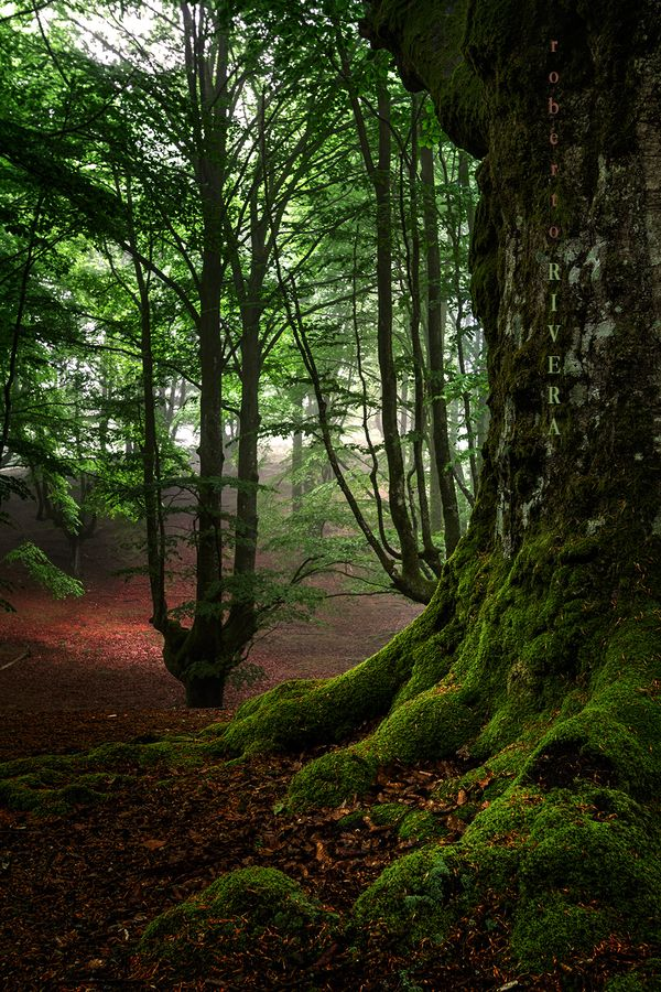 Forest in Basque, Spain