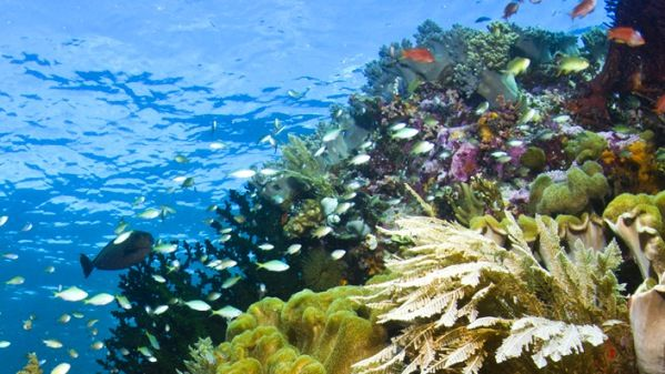 Indonesia has one of the most beautiful diving site in the world, known as the Wakatobi National Park located in Wakatobi, Southeast Sulawesi Province. Jacques Cousteau, the famous sea explorer and researcher, called it as as Underwater Nirwana.