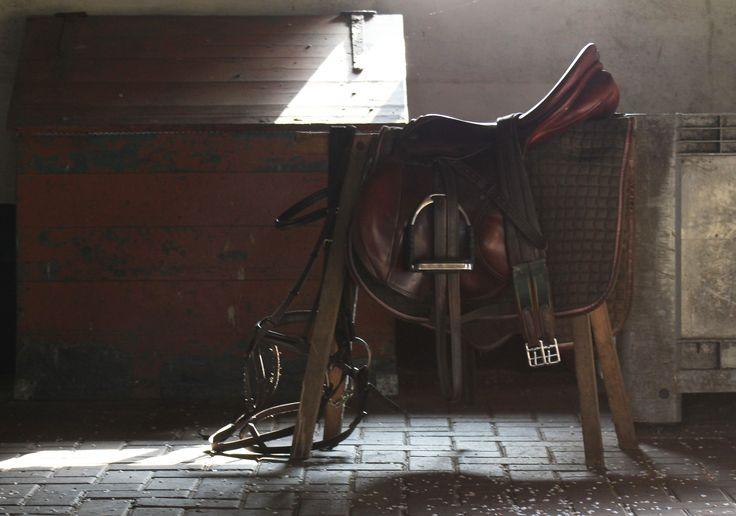 Horse tack, zaddle, bridle, pony