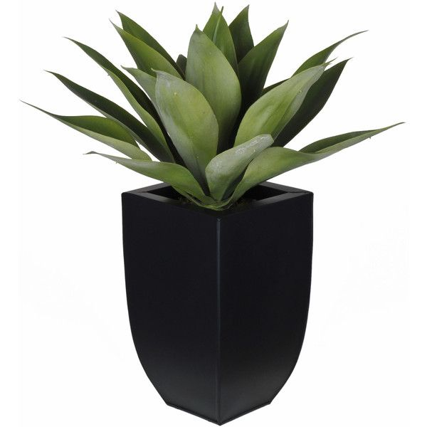 Artificial Desk Top Plant in Vase Reviews ($58) ❤ liked on Polyvore featuring home, home decor, floral decor, fake indoor plants and artificial indoor plants