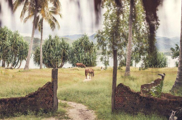 📷 @_tommasoriva_  #nature #tropical #travel #hideaway #giliasahanecolodge   #regram #specialview #horses #horselover #lombokfriendly #gilibible#wanderer #mylombok#giliguide#wonderfullombok #thegiliway #lombokexperience #explorelombok #lodge #bestintravel #airbnb #theglobewanderer #beautifuldestinations #uniquehotels #wonderful_places #besthotel #lodgelife #ecolodge #lonelyplanet #LovedByLater