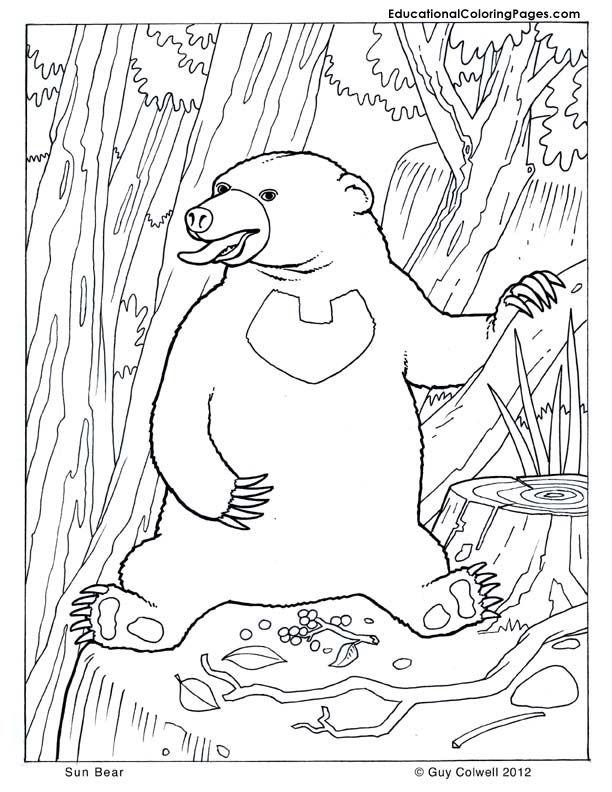Bear Coloring Animal Coloring
