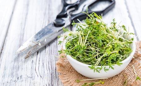 Kresse - Alleskönner für Ihre Gesundheit -> https://www.zentrum-der-gesundheit.de/kresse.html #gesundheit #ernaehrung #kresse