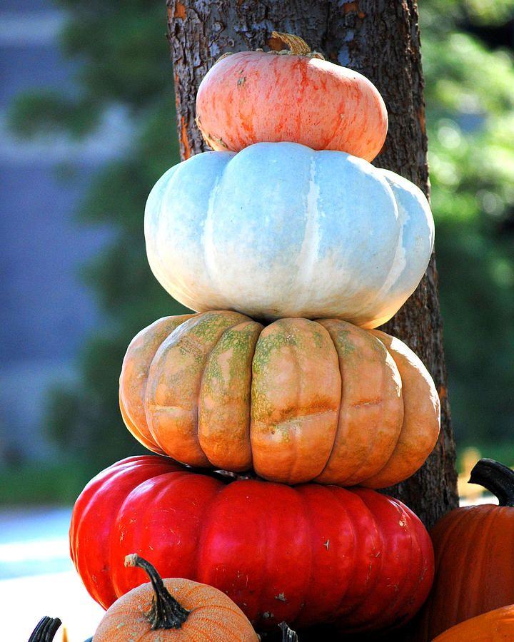 Pretty pumpkin stack  #pumpkins #fall #autumn #harvest #thanksgiving