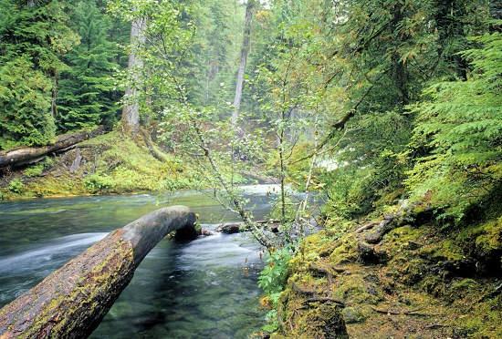eagle creek fly fishing oregon