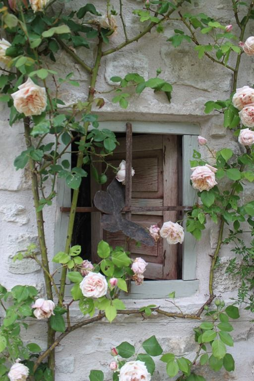 Climing rose & butterfly,Burgunday, France