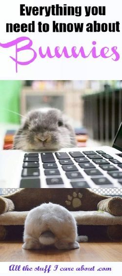 bunny kisses, bunny rabbit, bunny ears, bunny nose, bunny butt, bunny and people, bunny and kids, two bunnies, bunny love