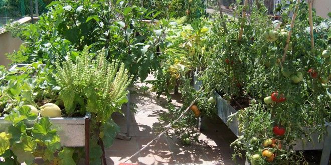 Top 25 ideas about huerto en casa on pinterest gardens - Huerto urbano balcon ...