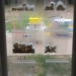 Planting and growing beans in our preschool window