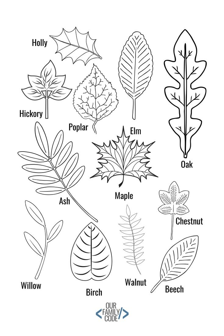Chalk Pastel Leaf Rubbings Steam Activity Our Family Code Fall Crafts Leaf Crafts Chalk Pastels