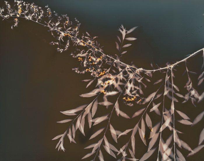 Jalo Porkkala - Lumen print