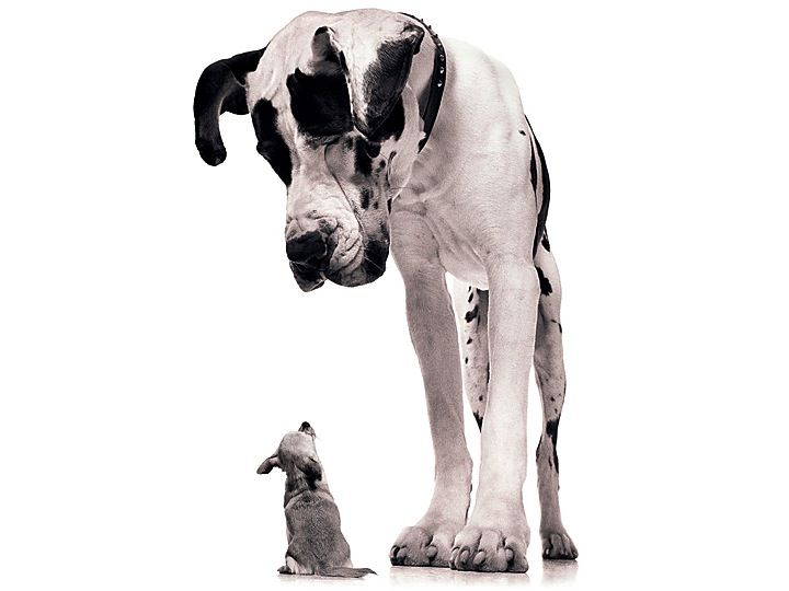 Big/Little Dogs - Prompt for dialogue/voice, descriptive writing