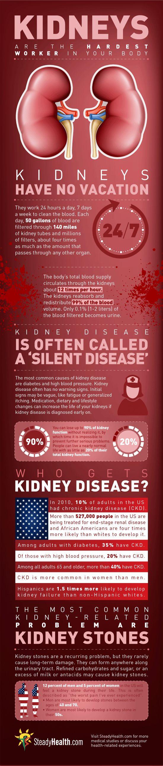 kidney disease infographic. Sí que trabaja un riñón a lo largo de la vida, ya lo creo.