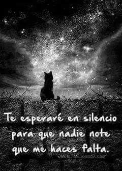 Te esperaré en silencio para que nadie note que me haces falta.