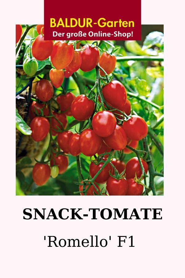 Snack Tomate Romello F1 1a Qualitat Kaufen Baldur Garten In 2020 Snack Ideen Tomaten Sorten Tomaten