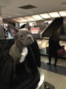 Tips for Traveling With Pets: Airline and Hotel Policy Roundup  Read more: http://thepointsguy.com/2014/04/tips-for-traveling-with-pets-airline-hotel-policy-roundup/#ixzz2zeIcpGBg Follow us: @thepointsguy on Twitter | thepointsguy on Facebook