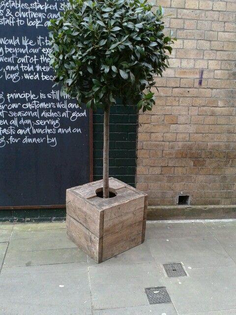 Bay tree in planter from reclaimed scaffolding boards