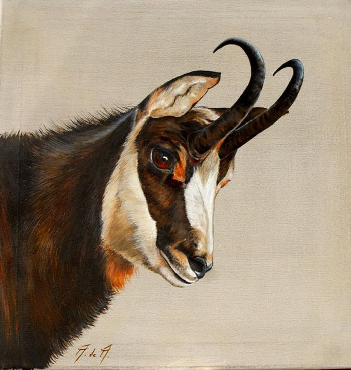 74 best Art chevreuils cerfs chamois mouflons images on