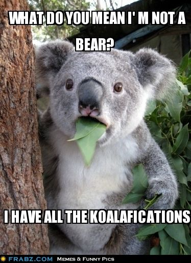 Get it? get it? KOALAfications like qualifications... haha classic comedy.