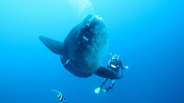 Potápění na Bali s měsíčníkem
