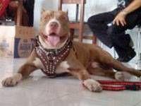 Sampai Anjing Pit Bull juga Ikutan Jaga Soal Ujian Nasional...