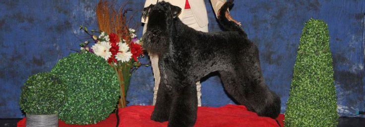 http://www.styledogs.es/ - Cursos de peluquería canina en Barcelona - Cursos de peluquería canina en Barcelona. Aprender peluqeria canina con Carol Buiza solicitando el servicio en nuestra web o llamándonos al número de teléfono. Te esperamos.     #animales, #mascotas, #perros, #peluqueria, #styledogs