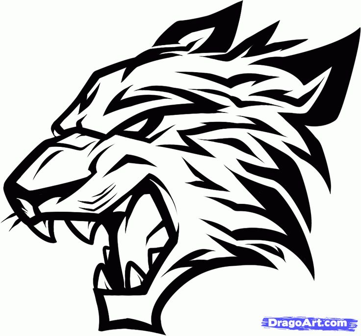 Tribal bobcat Head Drawings | Tribal Animal Drawings How to draw a tribal cat step