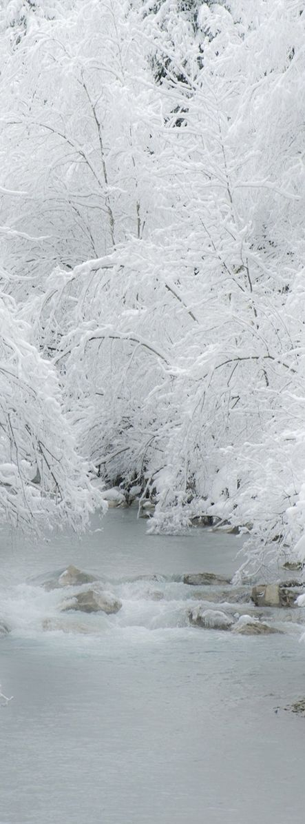 Winter White Landscape