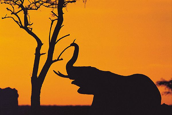 Tanzania. Safari
