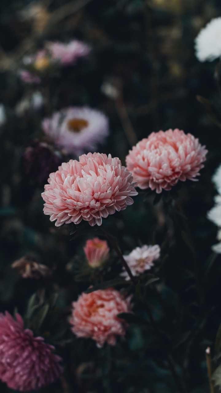 Beautiful Image By Irina Iriser Flower Pictures Flower Wallpaper Daisy Image