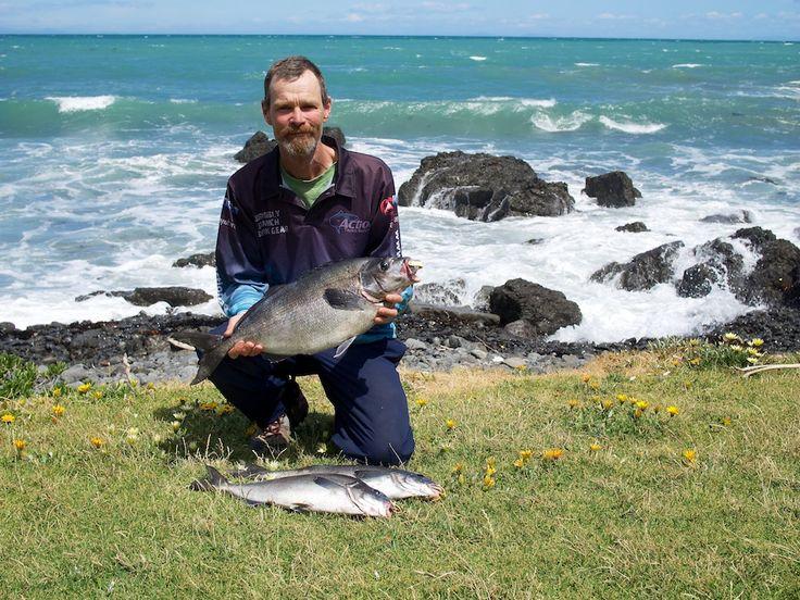 New Zealand Blue Moki