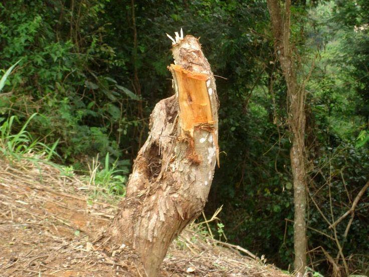 desmatamento no brasil pdf free