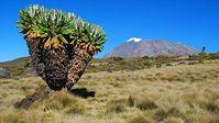 Aller en Tanzanie et grimper le Kilimandjaro!