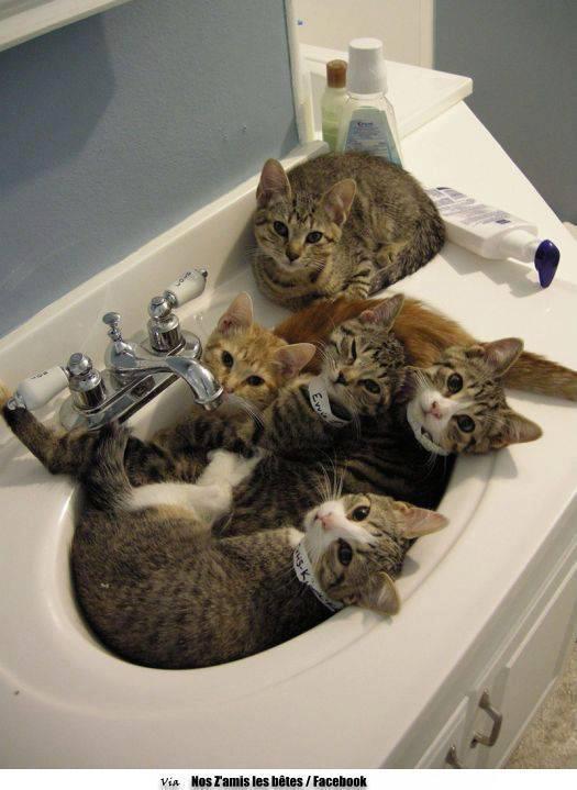 katten in het bakkie... kom er gezellig bij hoe meer zielen hoe meer vreugde