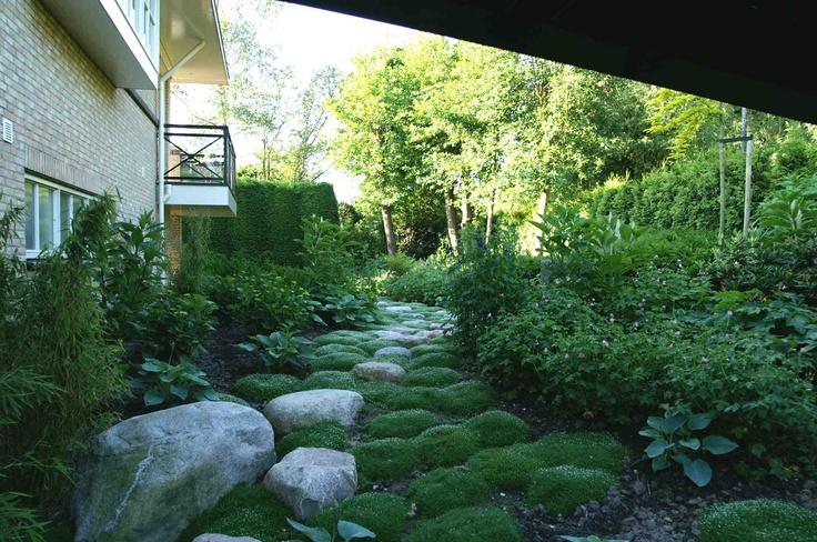 Plantenborder met sagina sabulata. Ontwerp en aanleg hoveniersbedrijf van Elsäcker Tuin
