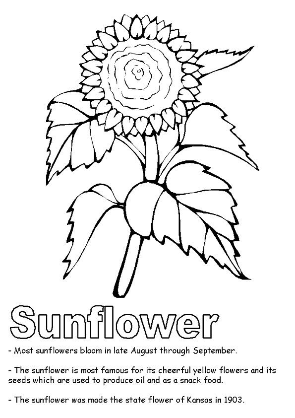 quirkles coloring pages for adults - photo#33
