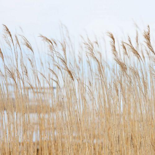 Vivez avec le paysage, les arbres et au bord de l'eau avec ces papiers peints  L'extérieur est une création merveilleuse et il hypnotise tout le monde. Il y a beaucoup de nuances de vert, de bleu et de brun. Admirez l'herbe verte ou les pousses de bambous, oubliez les soucis de la vie et détendez vos yeux. Le lever du soleil magnifique, le bord de mer et le ciel nuageux sont eux-mêmes très beaux. L'eau a beaucoup de formes : des lacs, des rivières, des mers. Chaque élément de la nature est…