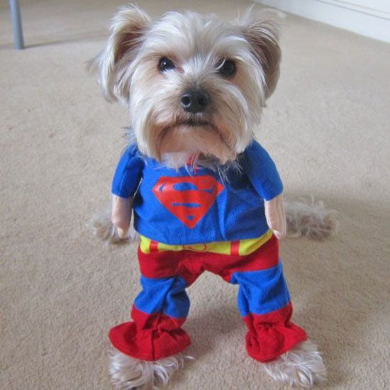 Best 25+ Cute dog costumes ideas on Pinterest