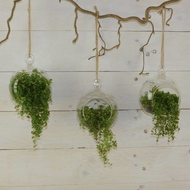 These hanging baubles. | 27 Terrariums That Will Restore Tranquility To Your Home