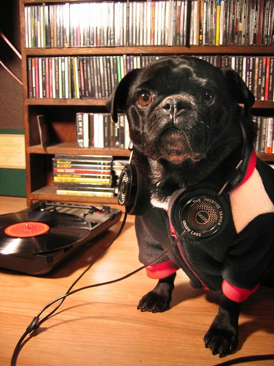 """hipsterpuppies:    barney is more concerned with """"dynamic range compression"""" and """"the loudness wars"""" than the fact that he has shitty taste in music  [photo via alison w]"""
