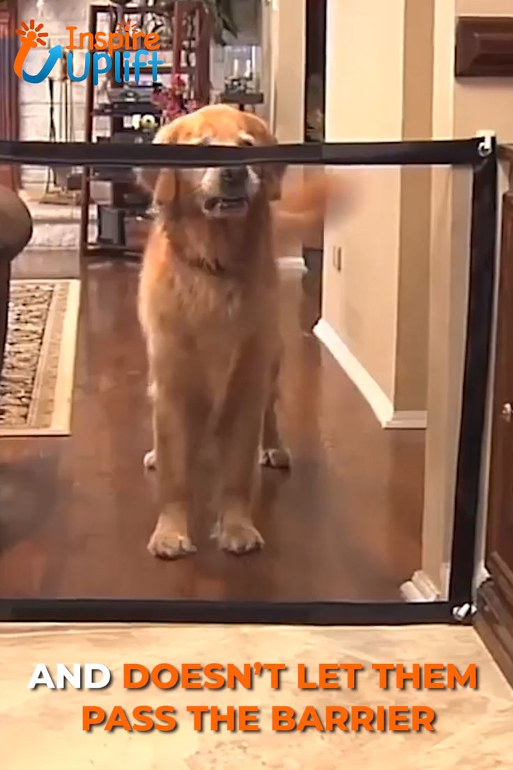 Dog Safety Gate 😍  The Britedoggie Dog Safety Gate can be installed anywhere, including doorways, between walls, in stairwells, indoors and even outdoors. Create a safe, private space for you or your pets quickly and easily.  Currently 50% OFF with FREE Shipping!
