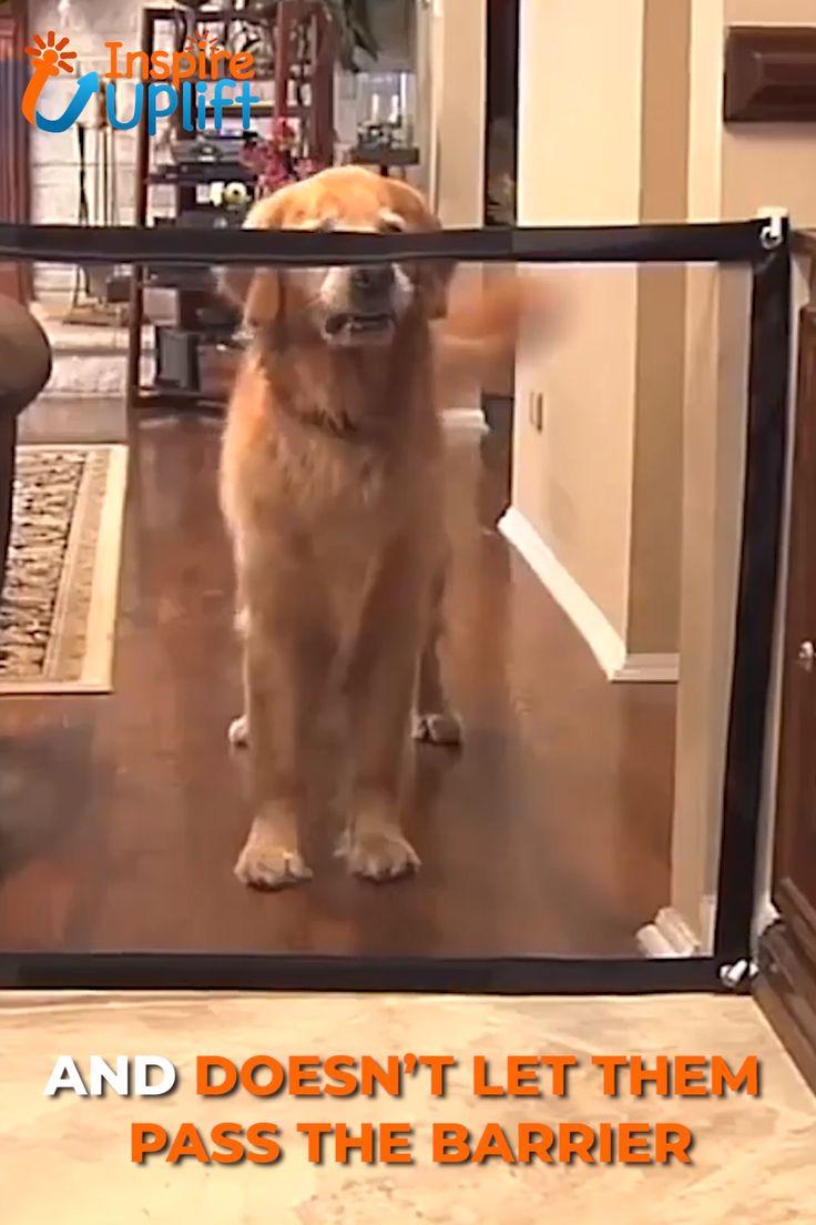 Dog Safety Gate 😍