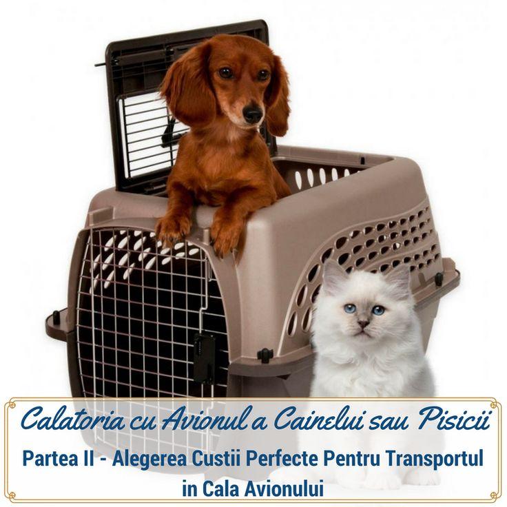 Calatoria cu Avionul a Cainelui Sau a Pisicii Partea II-a - Petplaza Romania