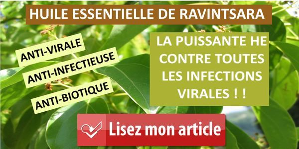 L'huile essentielle de ravintsara est antivirale. Grippe, bronchite, sinusite, insomnie, herpès, pensez à l'huile essentielle de ravintsara pour l'hiver.